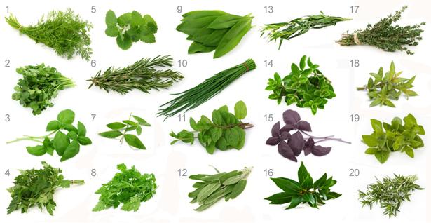 Cocina con hierbas culinarias ecoterrazas Nombres de plantas comunes